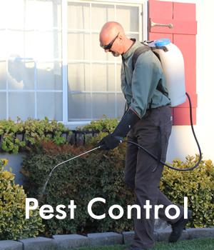 pest-control-sydney